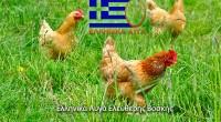 ( 6-άδα / 12-άδα / κιβώτιο) Φρέσκα αυγά , κατηγοριοποίηση εκτροφής «ελευθέρας βοσκής» με ημερομηνία παραγωγής-ημερομηνία λήξης-κωδικό αρ. κέντρου αυγοδιαλλογής-συσκευασίας-σε πλαστική διάφανη συσκευασία φιλική προς το περιβάλλον