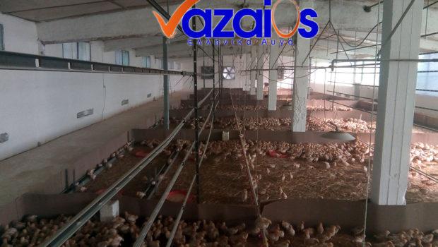 Το καινούργιο κοπάδι νεοσσίδων ελεύθερης βοσκής φωτογραφίζεται στις εγκαταστάσεις μας στην τοποθεσία Βένιζα στους πρόποδες του όρους Πατέρας. Αρχές καλοκαιριού 2018 θα ξεκινήσει η ωοτοκία τους. Αυγά Ελεύθερης Βοσκής Βαζαίος […]